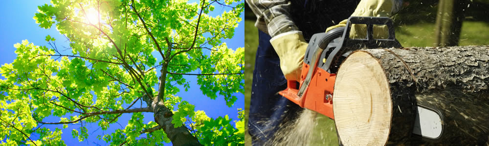 Tree Services Shrewsbury